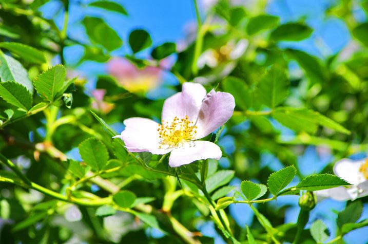 flore en Calenzana près camping Castors