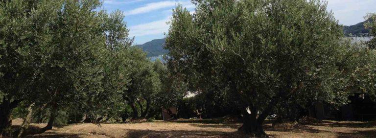 foire de l'olivier