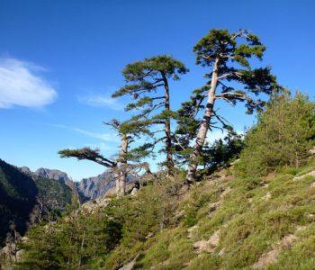 paysage Calenzana près camping Castor